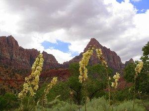 red rocks in Utah